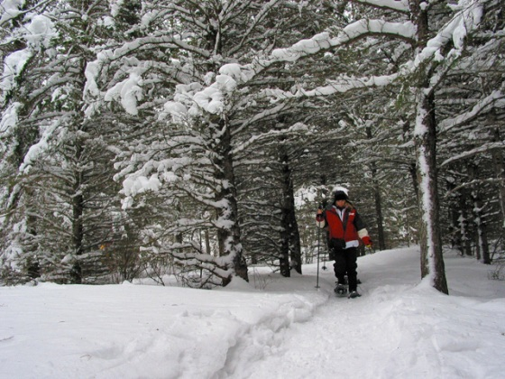 Snowshoeing trails in Riding Mountain National Park