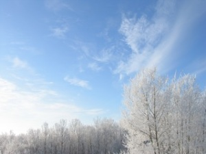 Hoarfrost and blue sky Manitoba