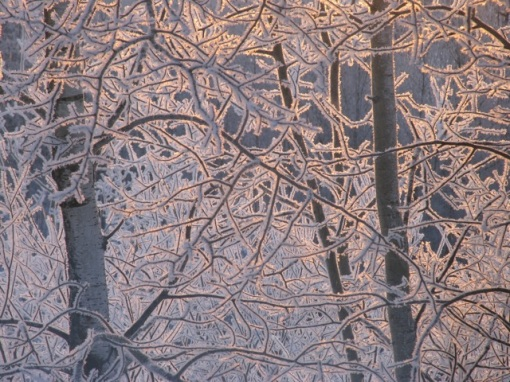 Hoarfrost sunrise backlit
