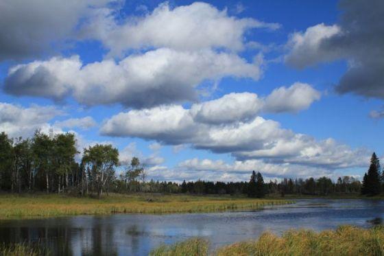 Beaver Pond 2_©Celes Davar