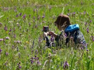 Photographing in a field of prairie flowers