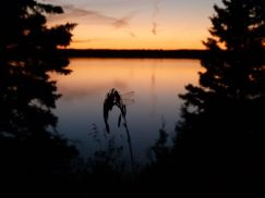 Dragonfly at sunset, Lake Audy, Riding Mountain National Park