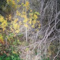 Textures of fall